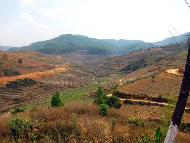 Brown terraces