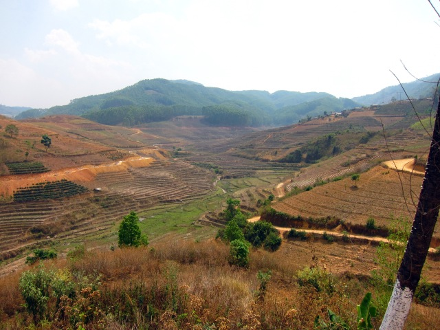 Brown terraces