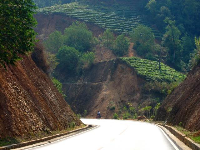 Tea vs. road construction