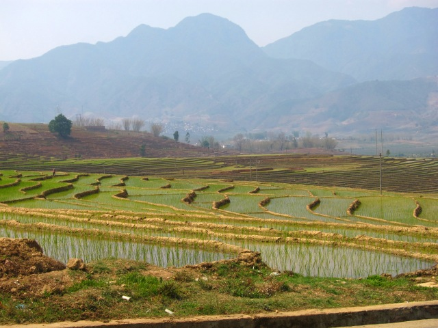 Rice paddies have a calming effect