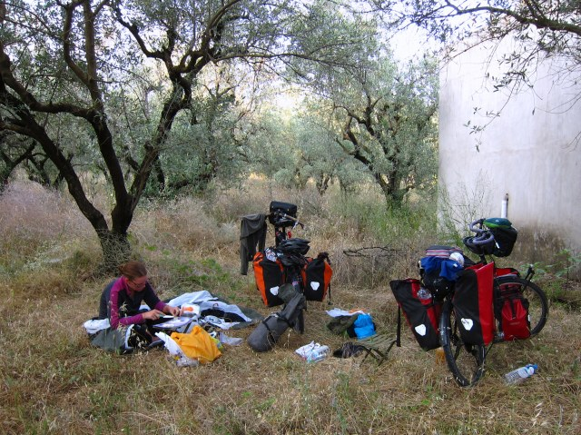 Olive grove campsite