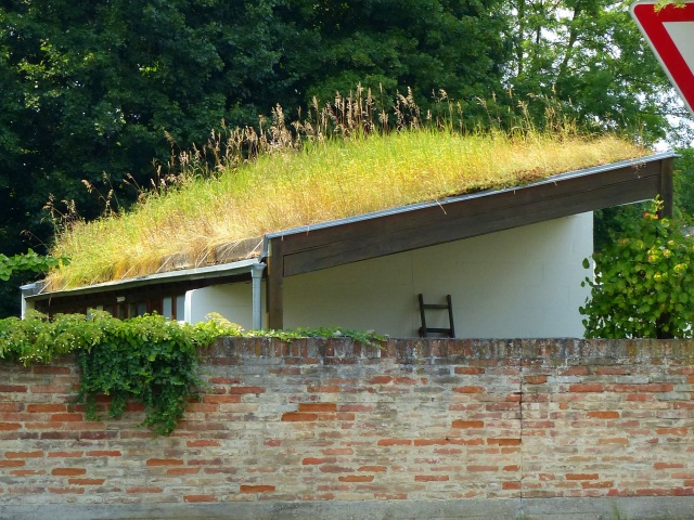 Super green roof