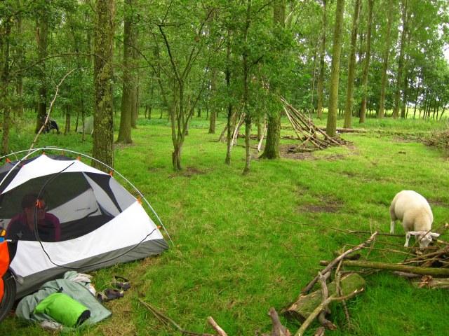 Our free campsite mates