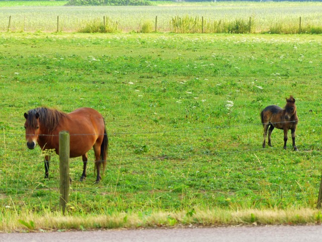 Fat ponies